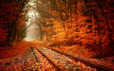 autumn-leaves-falling-background-wallpaper-4
